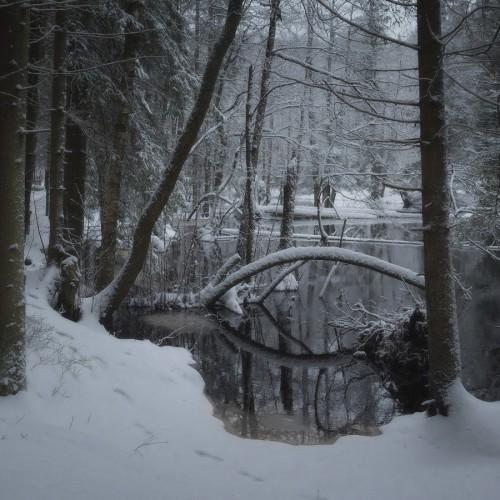 kolioli-20171215-Olga-Potapova-Winter-etude-3-Karelian-Isthmus