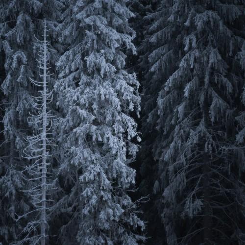 kolioli-20180113-Olga-Potapova-Пришельцы-и-Стражники-3