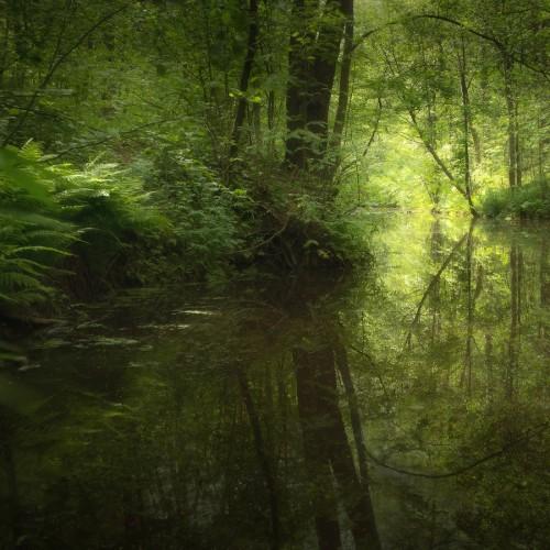 kolioli-20170705-Olga-Potapova-Hidden-Creek-Karelian-Isthmus