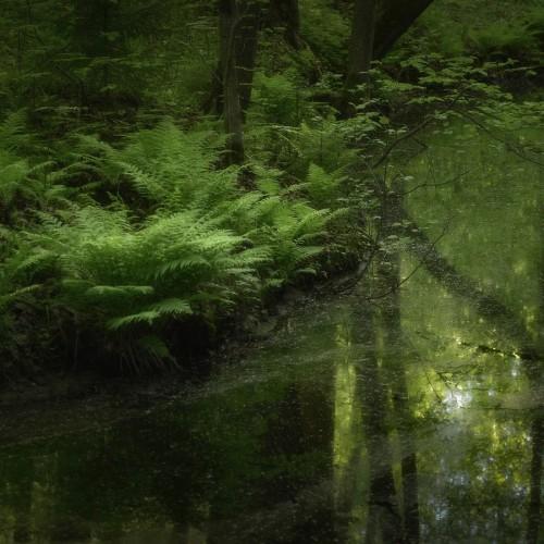 kolioli-20180526-Olga-Potapova-Green-backwater-Leningrad-region