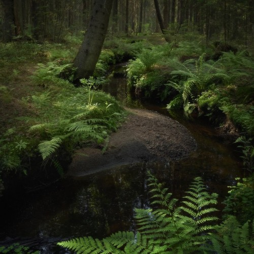 kolioli-20180612-Olga-Potapova-Wonderful-stream-Karelian-Isthmus