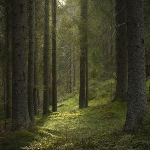 kolioli-20190825-Olga-Potapova-Green-Forest-Sacrament-Karelian-Isthmus