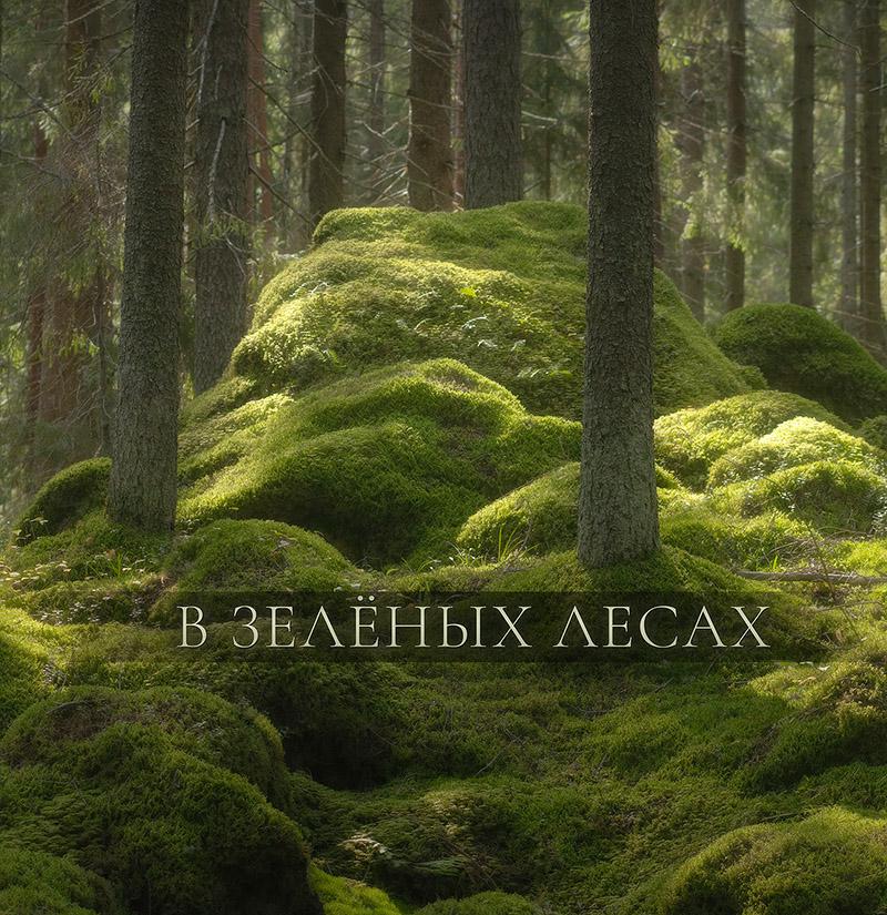 "Фотокнига ""В зелёных лесах"""