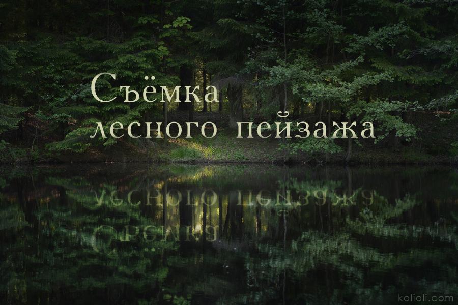 Съёмка лесного пейзажа. Как фотографировать в лесу.