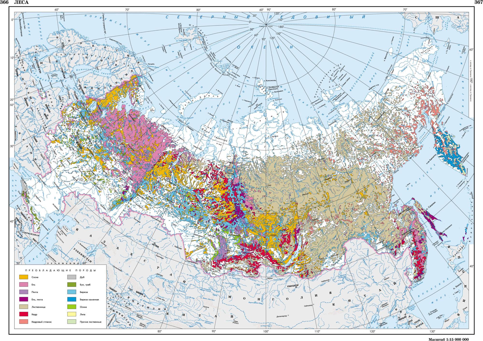 Преобладающие породы леса на территории России
